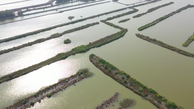 vídeos de stock e filmes b-roll de 4k aerial view dolly forward mangrove forest community and river. - camarão