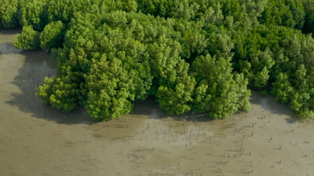 aerial view dolly left of mangrove forest - air to air shot stock videos & royalty-free footage