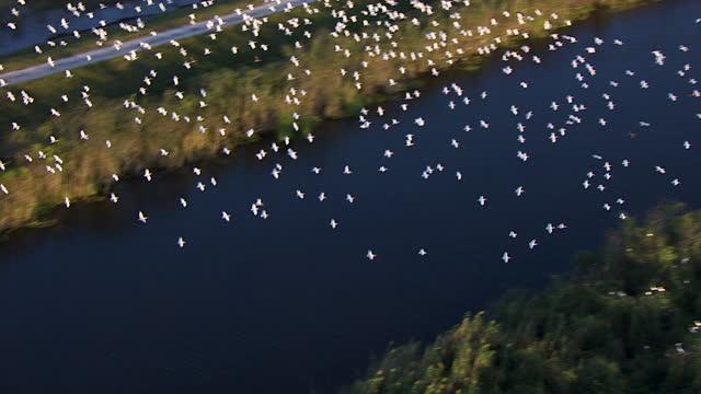 aerial view egrets resting in south florida everglades usa - エバーグレーズ国立公園点の映像素材/bロール