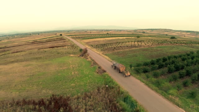 Aerial view : farmer tractor firewood