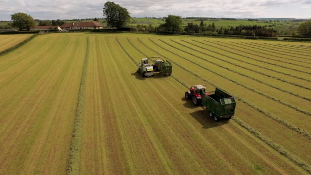 vidéos et rushes de aerial view field with harvester filling trailer until full - moderne