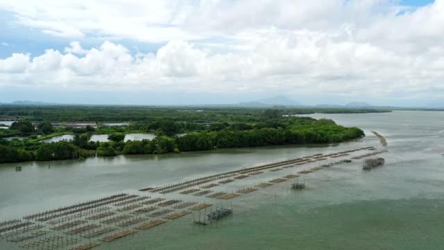 自然川の空中ビュー魚場 - テナガエビ点の映像素材/bロール
