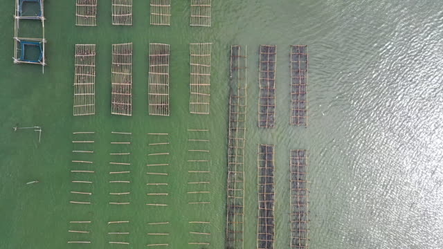 aerial view fish farm on nature river - south east asia stock videos & royalty-free footage