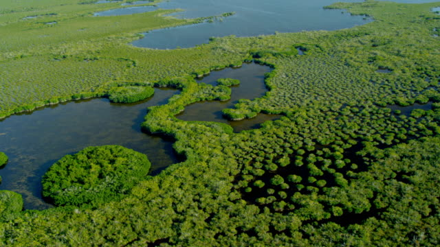 aerial view florida national park everglades marshland swamps - algae stock videos & royalty-free footage