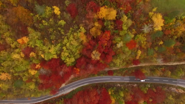 Aerial view, fly over forest and curve road 4K