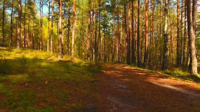 stockvideo's en b-roll-footage met luchtfoto. vliegen in het bos. - onbemand luchtvaartuig