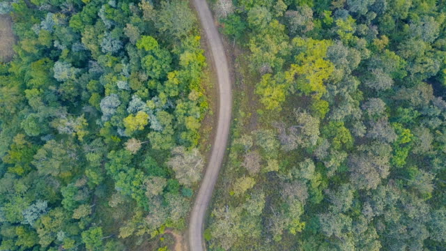 aerial view flying over asphalt two lane forest road with green trees of dense woods growing both sides. - pine stock videos & royalty-free footage