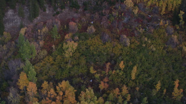 aerial view flying over colorful foliage at dusk - american fork city stock videos & royalty-free footage
