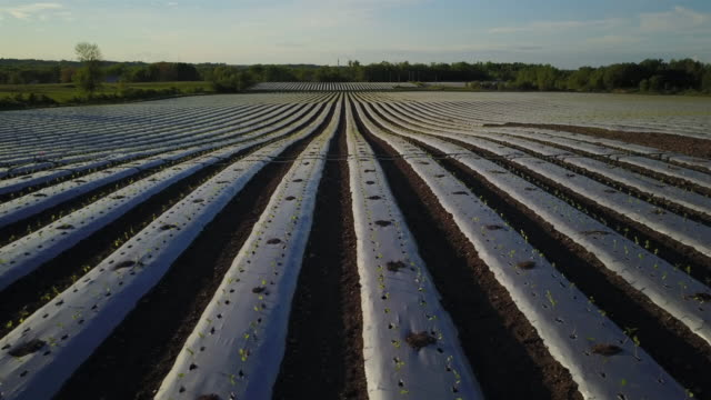 aerial view flying over rows of young green plants farm field - irrigation equipment stock videos & royalty-free footage