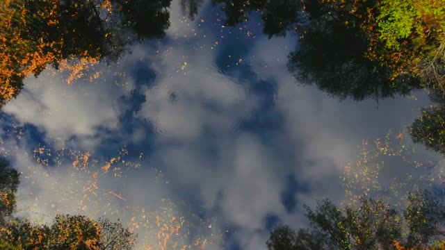 Aerial View. Flying over the forest lake. Aerial drone shot