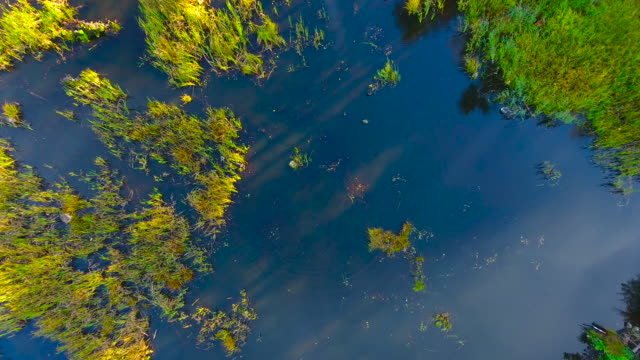 Aerial View. Flying over the forest swamps.