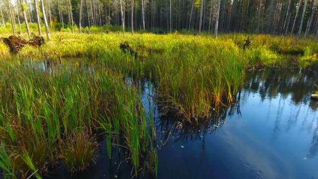 vidéos et rushes de vue aérienne. survoler les marécages de la forêt. - bras mort de cours d'eau