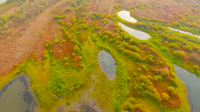 aerial view. flying over the forest swamps - backwater stock videos & royalty-free footage