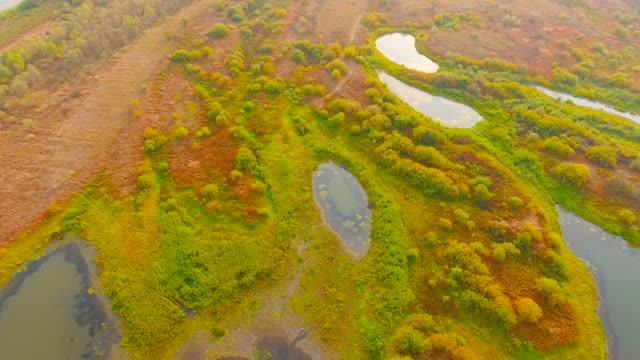vidéos et rushes de vue aérienne. survoler les marécages de la forêt - bras mort de cours d'eau