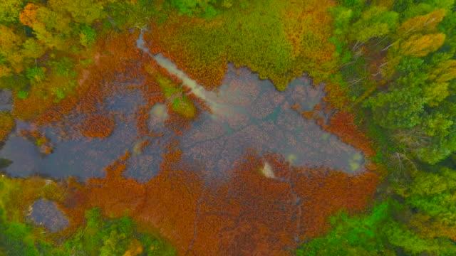Vista aérea. Volando sobre los pantanos del bosque
