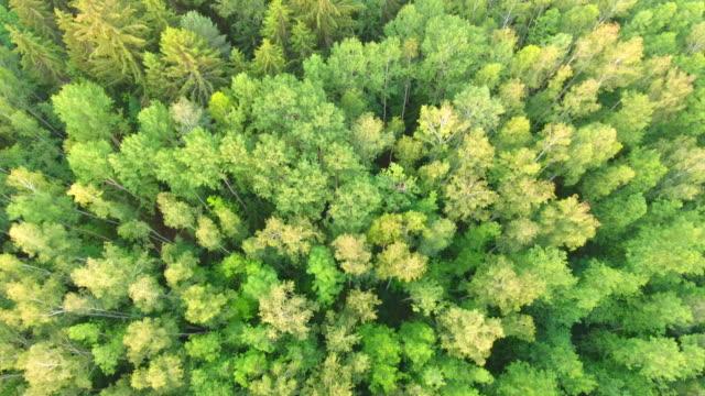Luftaufnahme. Flug über die Waldbäume. Luftbild-Drohne geschossen.