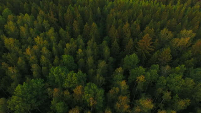 aerial view. flying over the forest trees. aerial drone shot. - timber stock videos and b-roll footage