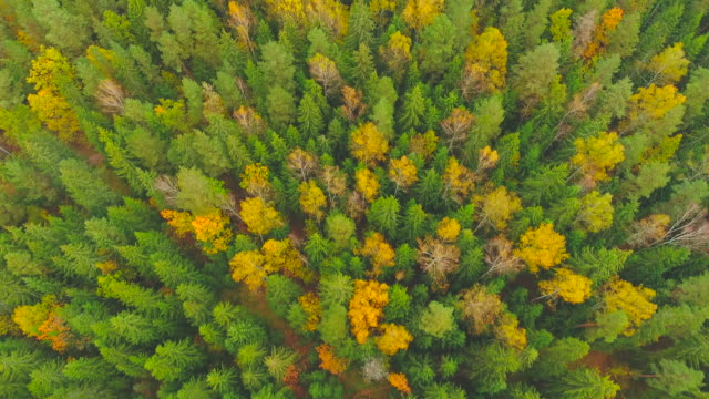 Aerial View. Flying over the forest trees. Aerial drone shot