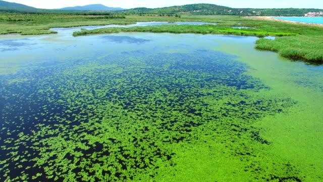 空撮。湿地帯での飛行 - 逆水点の映像素材/bロール