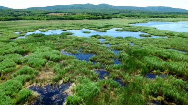 vidéos et rushes de vue aérienne. survolant les marais - bras mort de cours d'eau