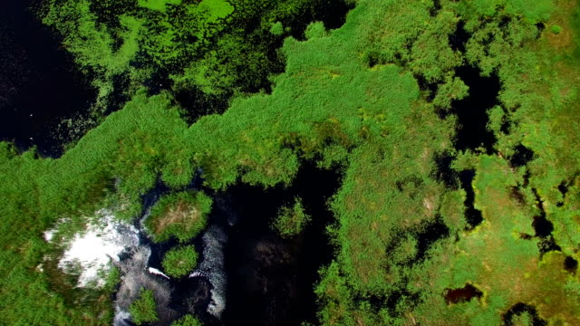 aerial view. flying over the swamps - backwater stock videos & royalty-free footage