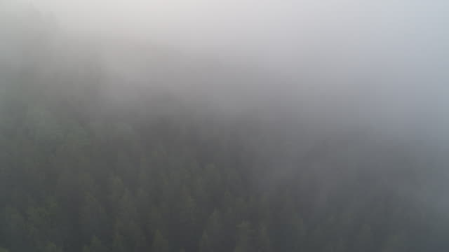 aerial view flying through fog over black forest, germany - baden wurttemberg stock videos and b-roll footage