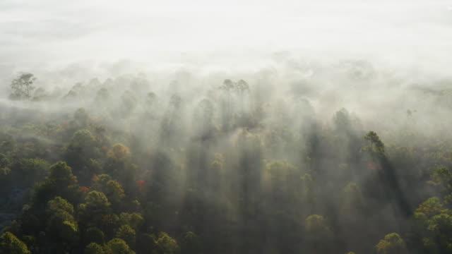 vídeos y material grabado en eventos de stock de niebla de vista aérea por la mañana - rayo de sol