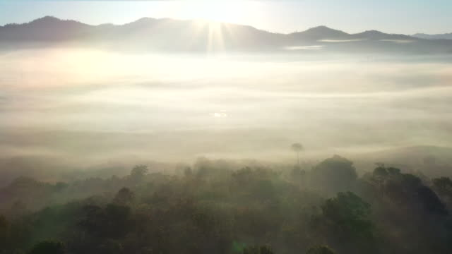 aerial view fog in the morning - woodland stock videos & royalty-free footage
