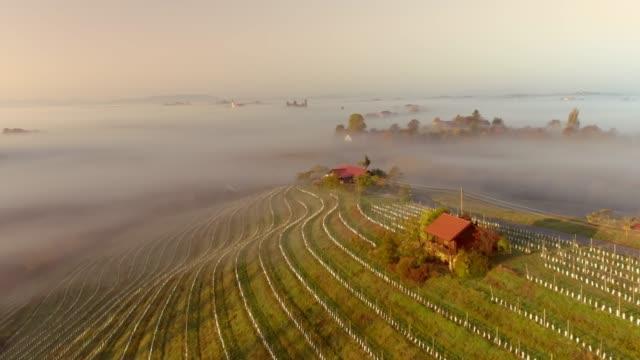 ws aerial view fog over tranquil,idyllic terraced vineyard hillside,jeruzalem,slovenia - covering stock videos & royalty-free footage