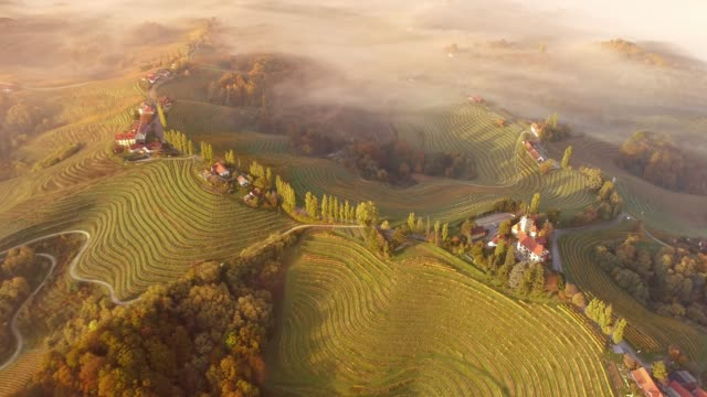 WS Aerial view fog over tranquil,idyllic terraced vineyard hillside,Jeruzalem,Slovenia