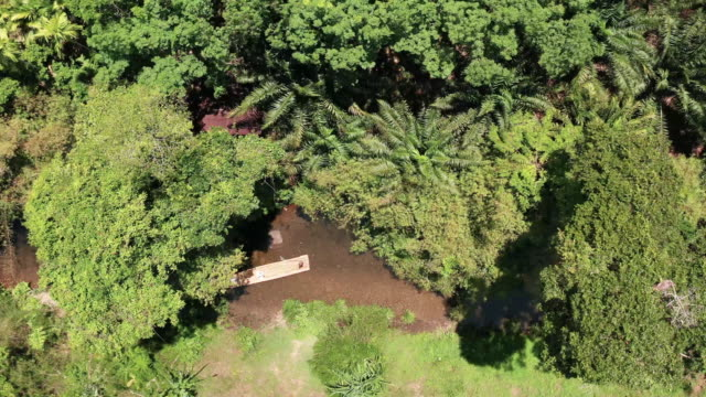 """4k aerial view footage bamboo rafting in rainforest """"little amazon"""" in phang nga, thailand - bamboo plant stock videos & royalty-free footage"""