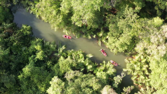 "stockvideo's en b-roll-footage met 4k aerial view footage canoeing in rainforest ""little amazon"" in phang nga, thailand - ontdekkingsreiziger"