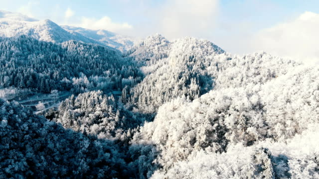aerial view forest in the cold winter - pine tree stock videos & royalty-free footage