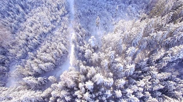 aerial view: forest in winter - fir tree stock videos and b-roll footage