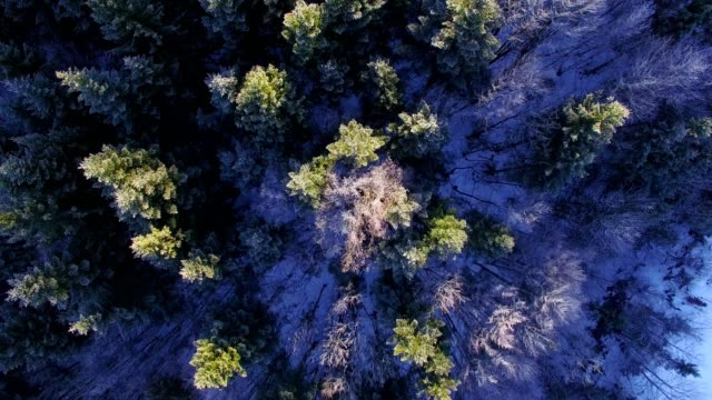 aerial view: forest in winter - frozen stock videos & royalty-free footage