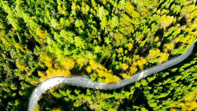Calzada del bosque vista aérea
