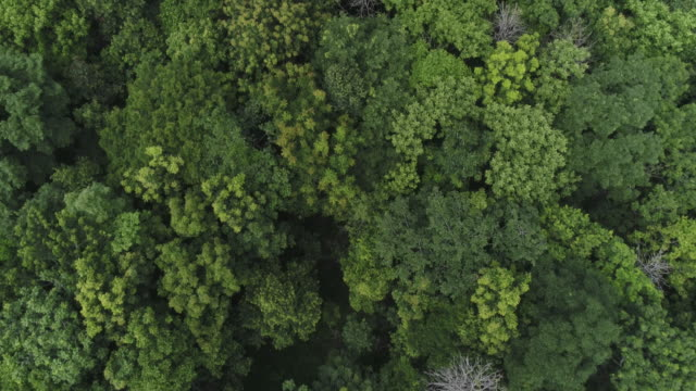 aerial view forest - treetop stock videos & royalty-free footage