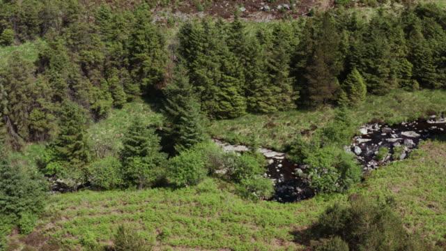vidéos et rushes de vue aérienne d'un drone d'un petit ruisseau coulant à travers une zone de forêt dans le sud-ouest de l'ecosse - remote location