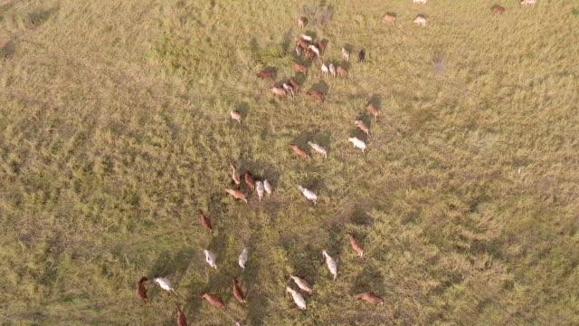 Luftbild vom Rind