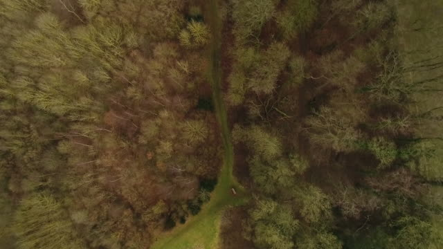 aerial view from directly above grantham woods - lush video stock e b–roll