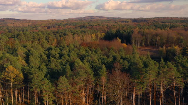 aerial view from wood cutting area in forest - cutting stock videos & royalty-free footage