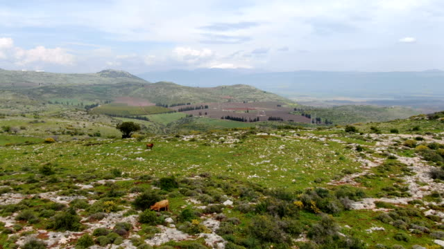aerial view - galilee natural mediterranean landscape in spring - middle east stock videos & royalty-free footage