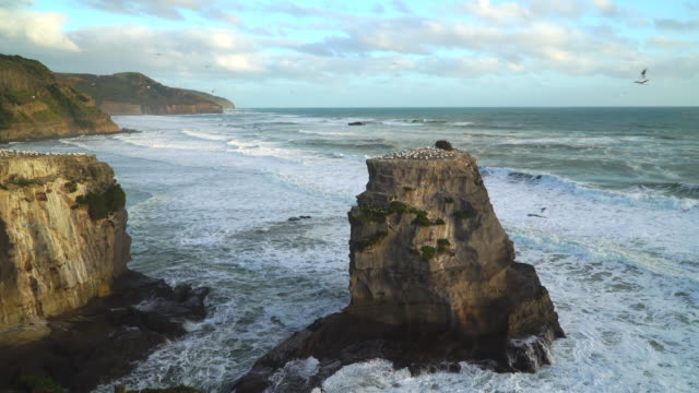 Aerial view Gannet colony at Muriwai beach,Auckland, New Zealand