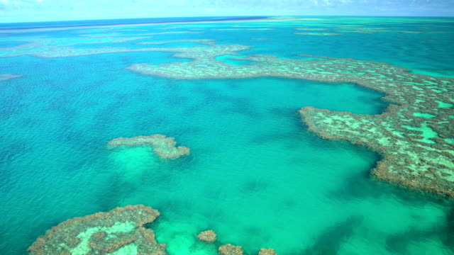 aerial view great barrier reef pacific ocean australia - reef stock videos & royalty-free footage