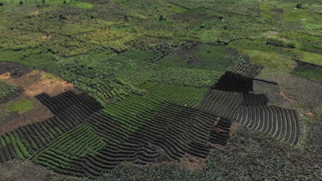 vídeos y material grabado en eventos de stock de aerial view green cultivated land in a valley in haiti - hispaniola