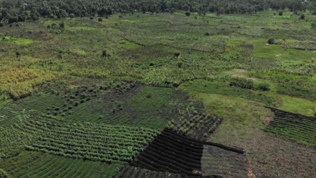 aerial view green cultivated land in haiti - patchwork stock videos & royalty-free footage
