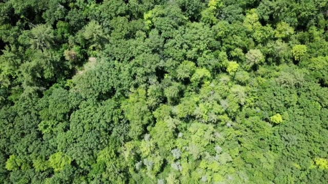 vídeos y material grabado en eventos de stock de vista aérea: verde bosque follaje árbol bosque pabellón naturaleza segundo plano - ontario canadá