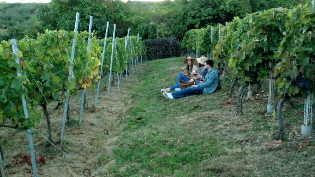 aerial view, group of people in vineyard drinking vine - vine stock videos & royalty-free footage