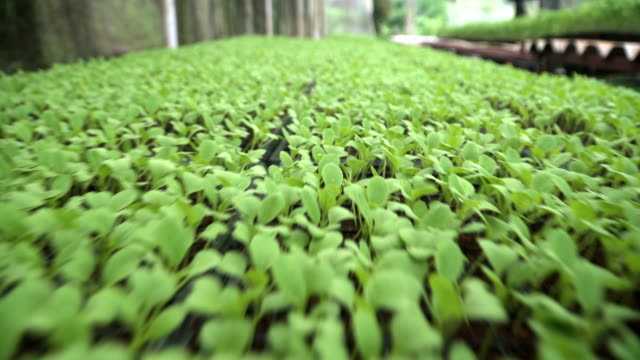 Aerial View: Growing baby plant in greenhouse