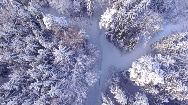 stockvideo's en b-roll-footage met luchtfoto: arreslee in een winter wonderland - werkdier